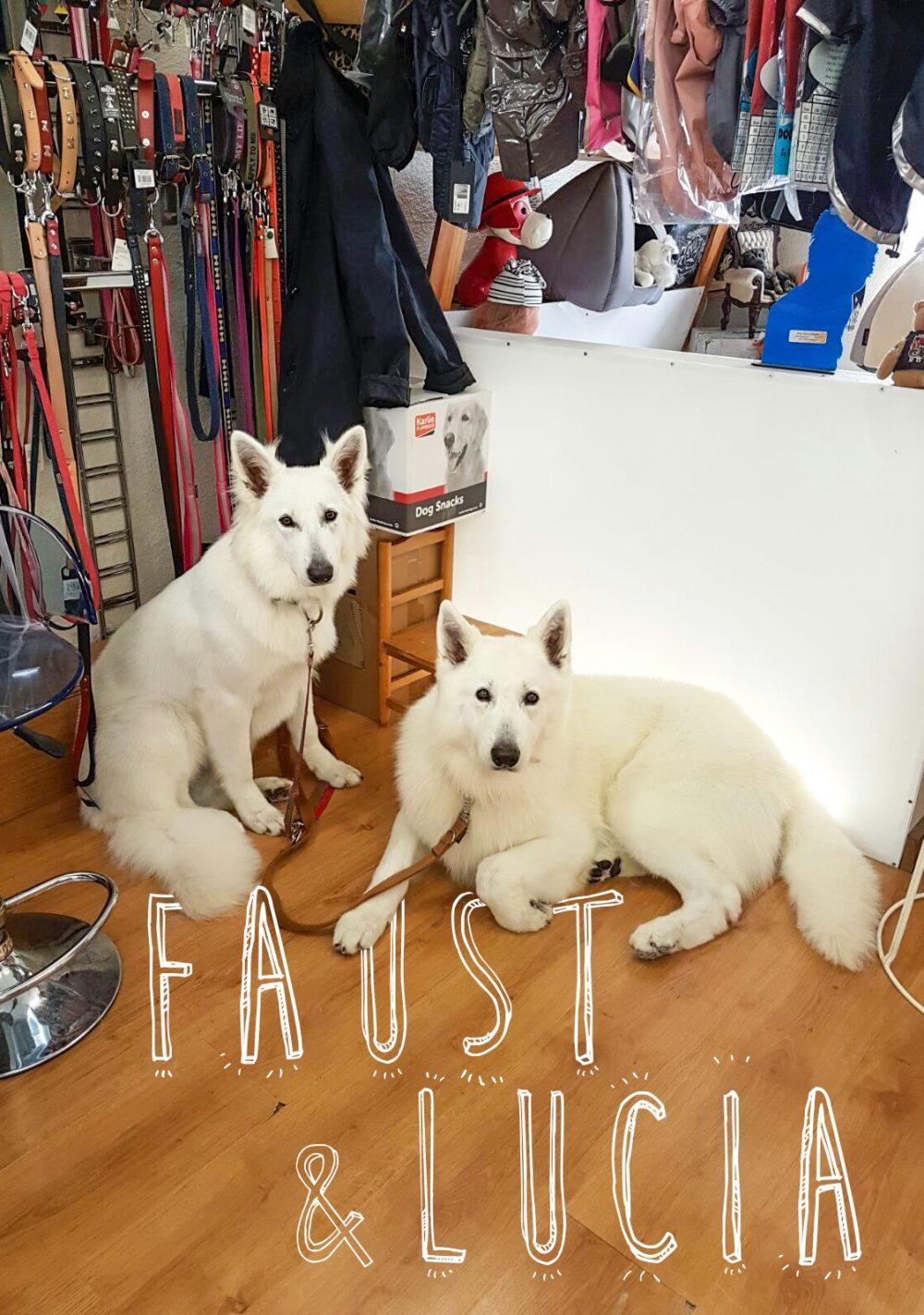 Faust et Lucia iDÉFIX Toilettage