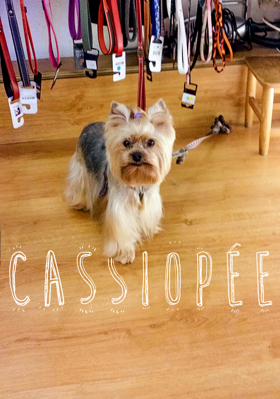 Cassiopée IDÉFIX Toilettage